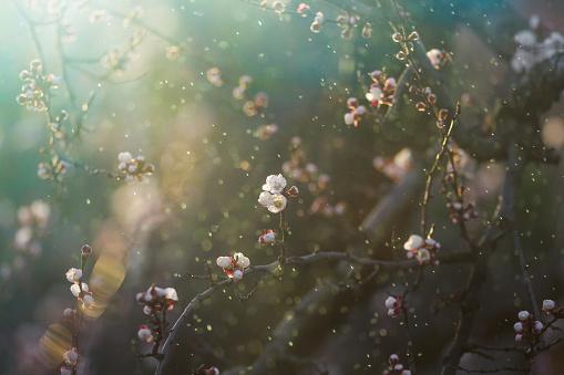 Flower Stigma「Spring blossom」:スマホ壁紙(15)