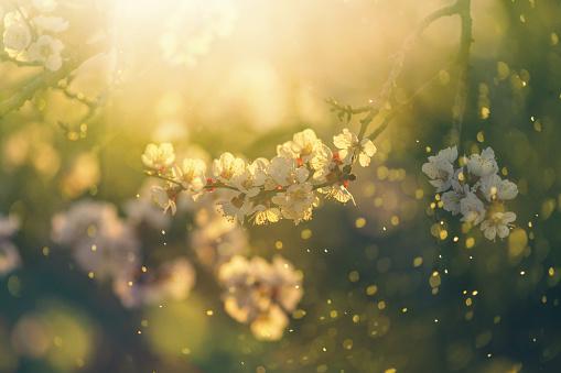 Season「Spring blossom」:スマホ壁紙(19)