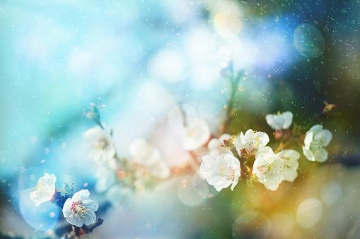 季節「春の花」:スマホ壁紙(1)