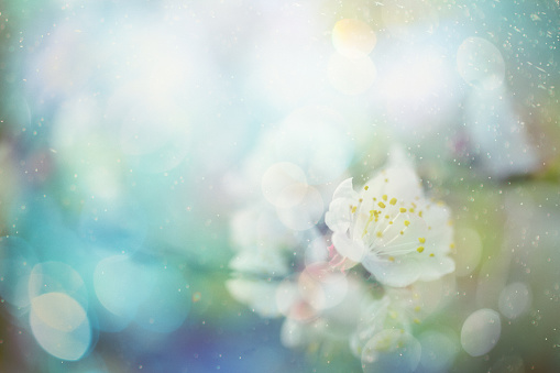 キラキラ「春の花」:スマホ壁紙(13)