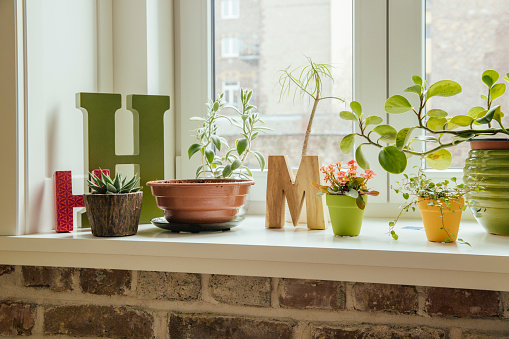 Decoration「Window sill with plants and letters H and M」:スマホ壁紙(7)