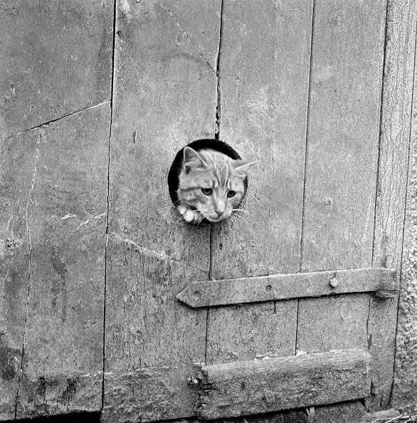 Agricultural Building「Cat Looking Through A Hole」:写真・画像(15)[壁紙.com]