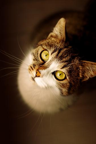 Mixed-Breed Cat「cat looking up」:スマホ壁紙(12)