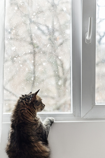 雪「Cat looking through window at the snow」:スマホ壁紙(8)