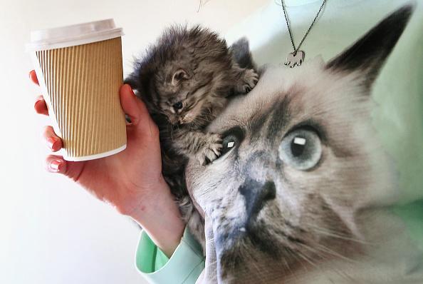 Kitten「Pop-up Kitten Cafe Opens In Sydney」:写真・画像(15)[壁紙.com]