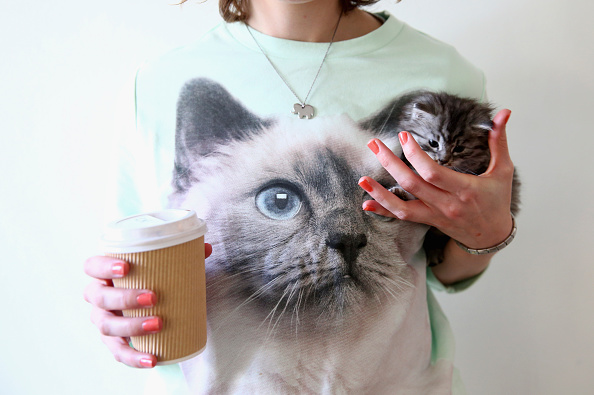 Kitten「Pop-up Kitten Cafe Opens In Sydney」:写真・画像(12)[壁紙.com]