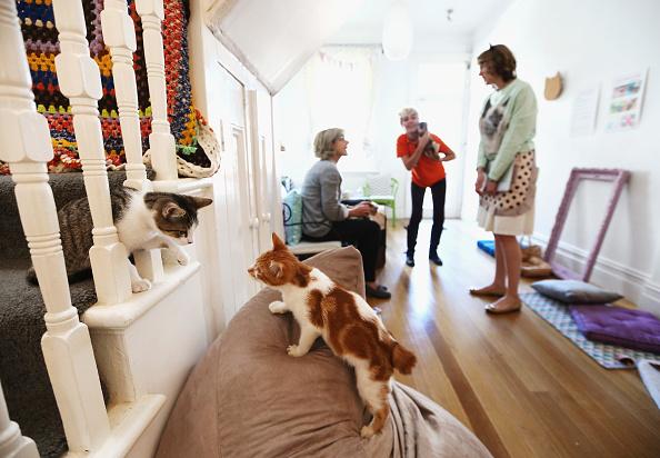 Kitten「Pop-up Kitten Cafe Opens In Sydney」:写真・画像(14)[壁紙.com]