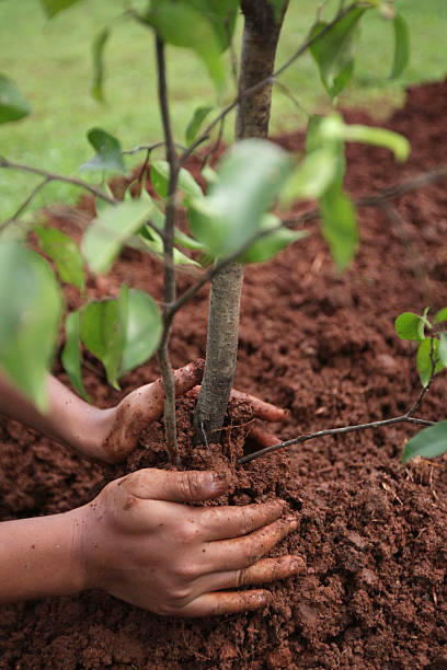 Bike To Work Group Members Conduct Tree Planting Program:ニュース(壁紙.com)