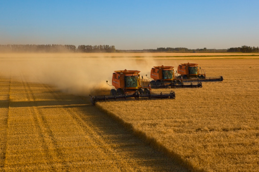 Harvesting「Large scale wheat harvest operation」:スマホ壁紙(2)