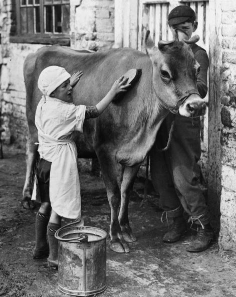 Agricultural Building「Cow Wash」:写真・画像(4)[壁紙.com]