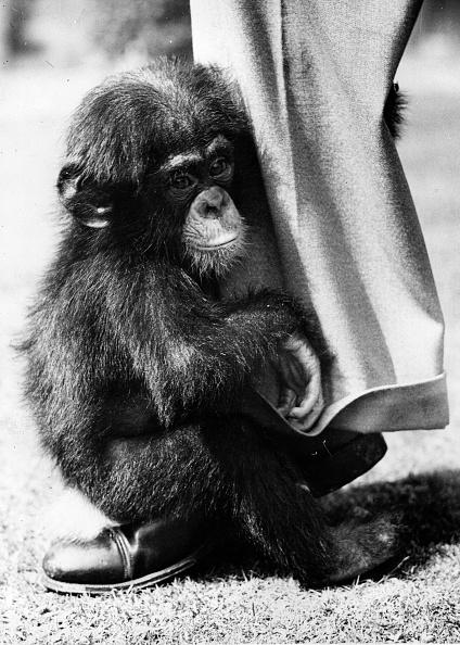 Protection「Baby Chimpanzee」:写真・画像(11)[壁紙.com]
