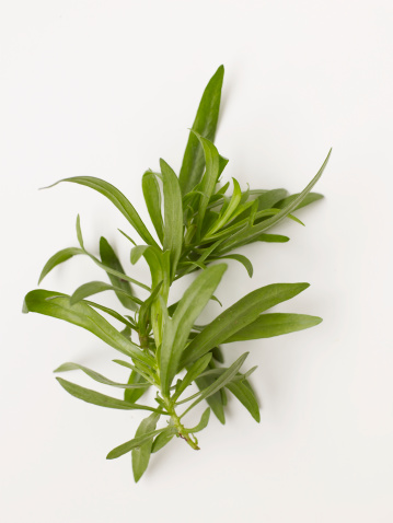 Tarragon「Fresh tarragon on white background」:スマホ壁紙(2)