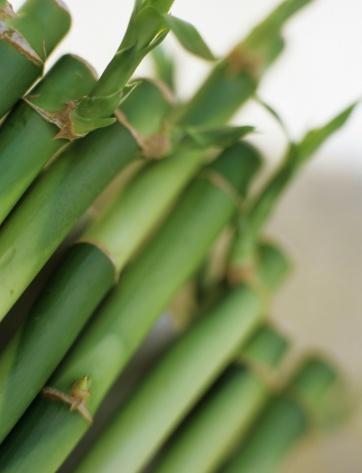 Feng Shui「Bamboo, close-up」:スマホ壁紙(16)