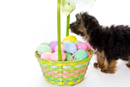 Easter Basket「Puppy's First Easter」:スマホ壁紙(13)