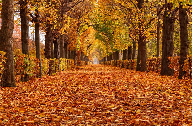 Empty alley covered by foliage in autumn park, Vienna, Austria:スマホ壁紙(壁紙.com)