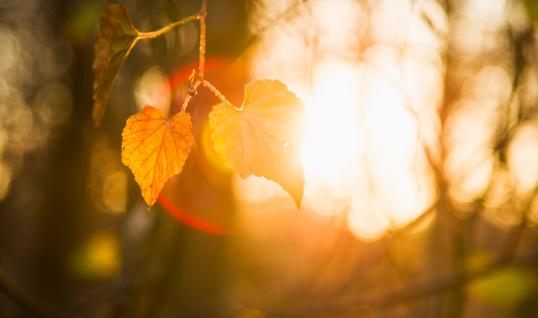 秋「USA, North Carolina, Autumn leaves」:スマホ壁紙(9)