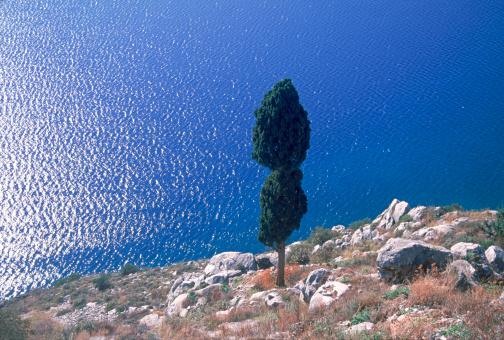 Aegean Sea「Lone cypress, Gulf of Argos, Aegean Sea off Nafplion, Greece」:スマホ壁紙(14)