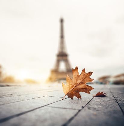 月「パリの秋」:スマホ壁紙(16)