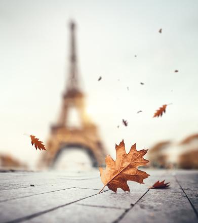 季節「パリの秋」:スマホ壁紙(13)