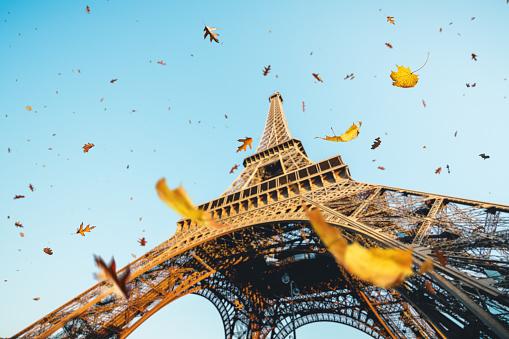 かえでの葉「パリの秋」:スマホ壁紙(1)