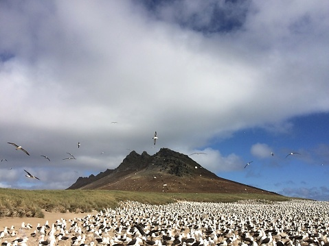 Falkland Islands「Clouds and soaring birds, albatross colony, Falkland Islands」:スマホ壁紙(10)