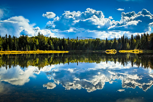 Boreal Forest「Clouds and boreal forest reflect on 48 Mile Pond, Chena River State Recreation Area」:スマホ壁紙(4)