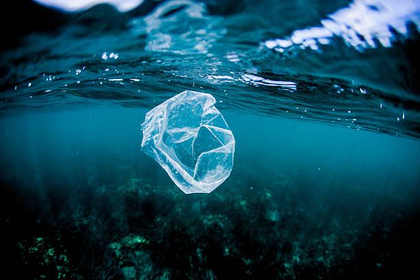 Plastic bag floating over reef in the ocean, Costa Rica:スマホ壁紙(壁紙.com)