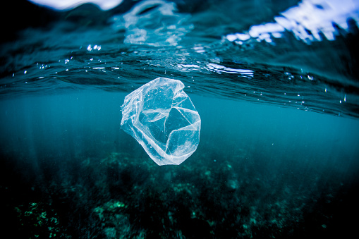 Pollution「Plastic bag floating over reef in the ocean, Costa Rica」:スマホ壁紙(4)