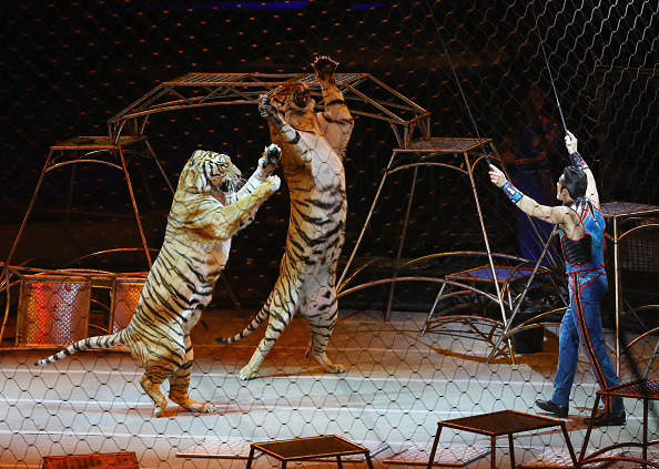 Bruce Bennett「Ringling Bros Barnum and Bailey Circus Holds Final Show」:写真・画像(4)[壁紙.com]