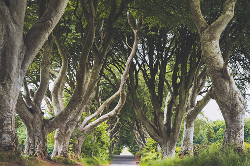 Fairy Tale「Dark Hedges Northern Ireland」:スマホ壁紙(15)