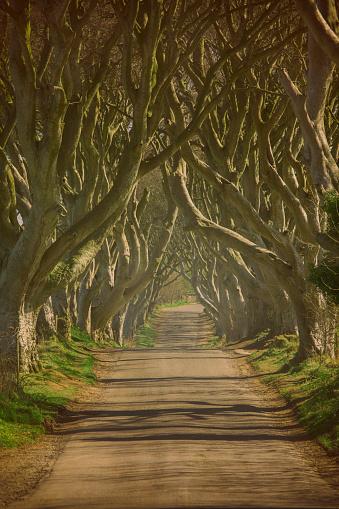 Natural Landmark「Dark hedges of Northern Ireland」:スマホ壁紙(18)