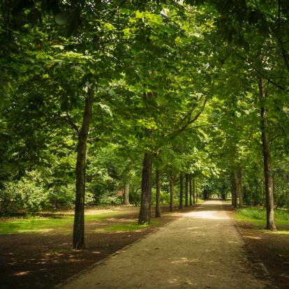 Avenue「Tiergarten park in spring - Berlin」:スマホ壁紙(9)