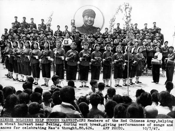 Grass Family「Mao Celebration」:写真・画像(10)[壁紙.com]
