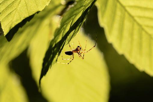 Montérégie「Spider, Mont Saint-Bruno National Park, Monteregie region」:スマホ壁紙(19)