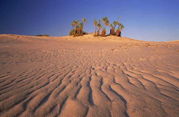 view over sand dune to pandanus palms, cape leveque, wa, australia:スマホ壁紙(壁紙.com)