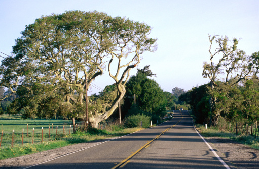 California State Route 1「Highway 1 in Olema Valley.」:スマホ壁紙(2)