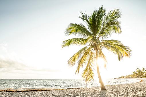 Single Tree「USA, Florida, Key West, palm tree on beach in backlight」:スマホ壁紙(19)