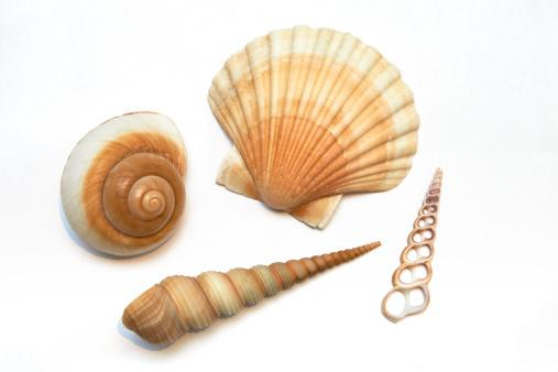 貝殻「Sea shells on white background」:スマホ壁紙(9)