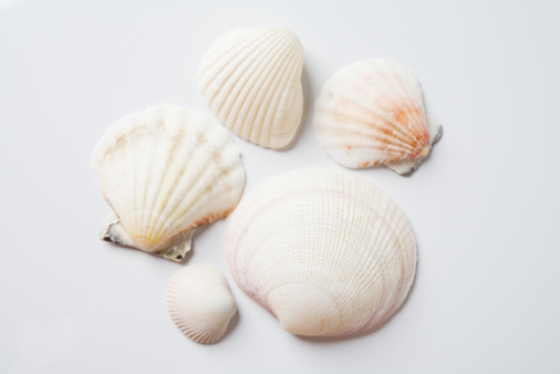 Scallop「Sea shells」:スマホ壁紙(15)