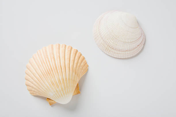 Sea shells:スマホ壁紙(壁紙.com)