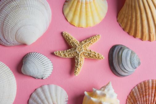 Mollusk「Sea shells」:スマホ壁紙(3)