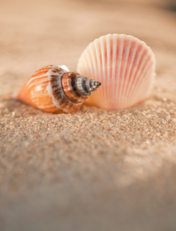 貝殻「Sea shells in sand」:スマホ壁紙(12)