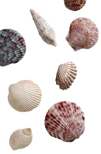 貝殻「Sea Shells」:スマホ壁紙(2)