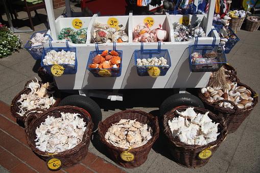 Gift Shop「sea shells」:スマホ壁紙(10)