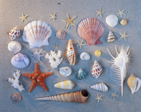 Collection「Sea shells and starfish arranged on sand」:スマホ壁紙(8)