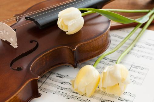 Violin「Violin and tulips on sheet music」:スマホ壁紙(16)