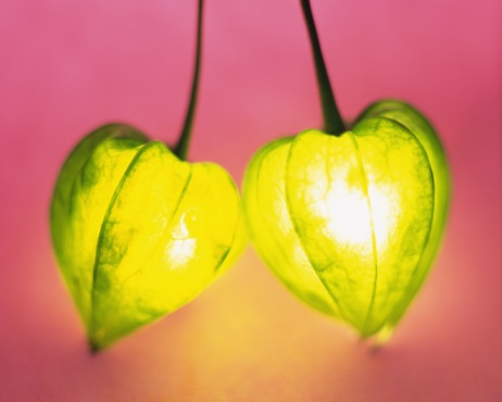 Chinese Lantern「Lighting winter cherries, front view, colored background」:スマホ壁紙(6)