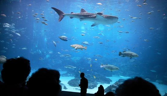 Shark「shark in Atlanta's aquarium」:スマホ壁紙(18)