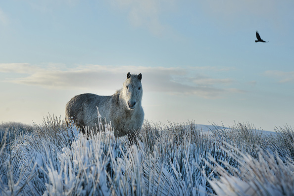 Horse「Winter Weather Hits Belfast」:写真・画像(3)[壁紙.com]