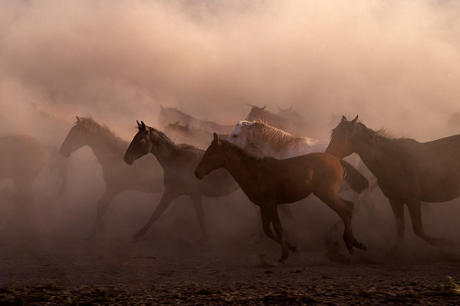 Turkey - Middle East「Wild horse herd running on a dry swamp, Kayseri Hurmetci , Central Anatolia, Turkey」:スマホ壁紙(16)
